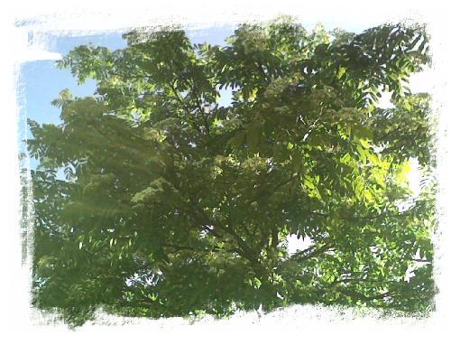 natur-trad.jpg